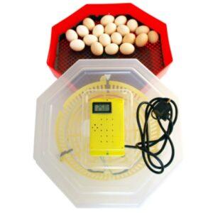 incubator oua cu termometru